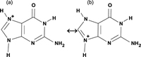Succesfully synthesis and detection of a Seaborgium (element 106) carbonyl complex - Seaborgium shows a typical chemical property of the group six in the periodic table of the elements -